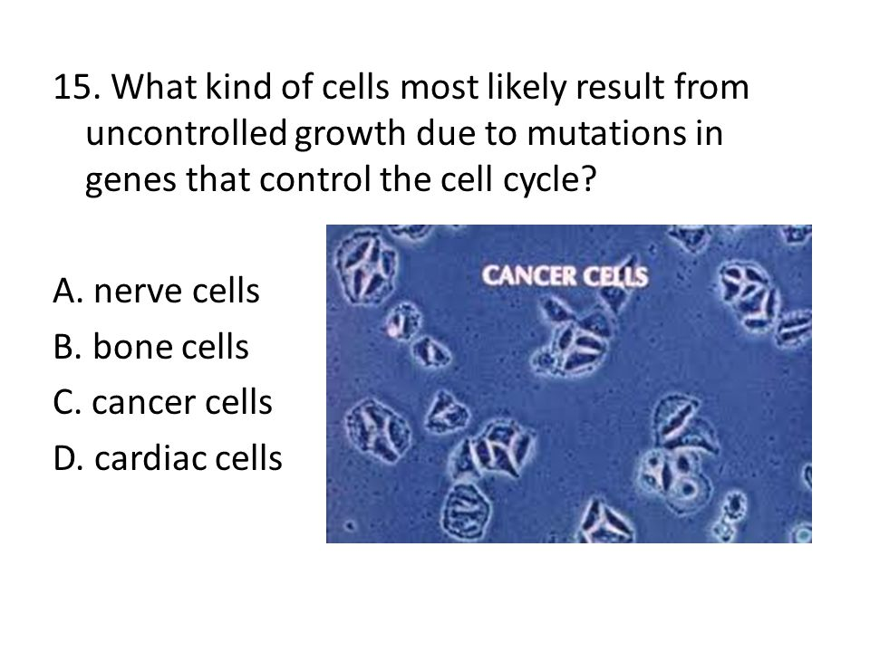 15. What kind of cells most likely result from uncontrolled growth due to mutations in genes that control the cell cycle