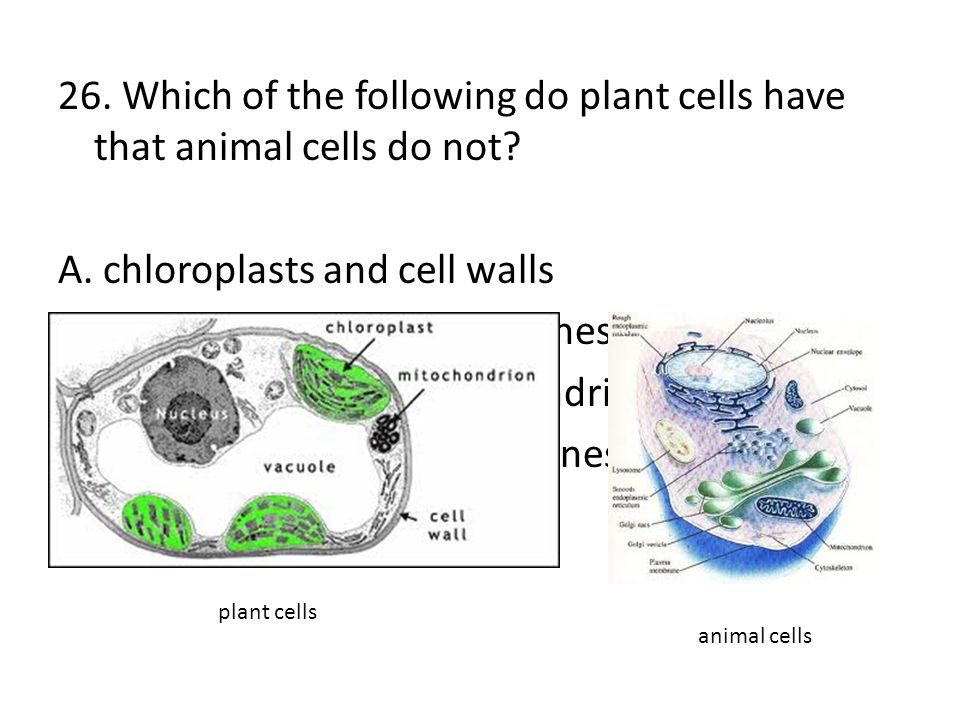 A. chloroplasts and cell walls B. vacuoles and cell membranes
