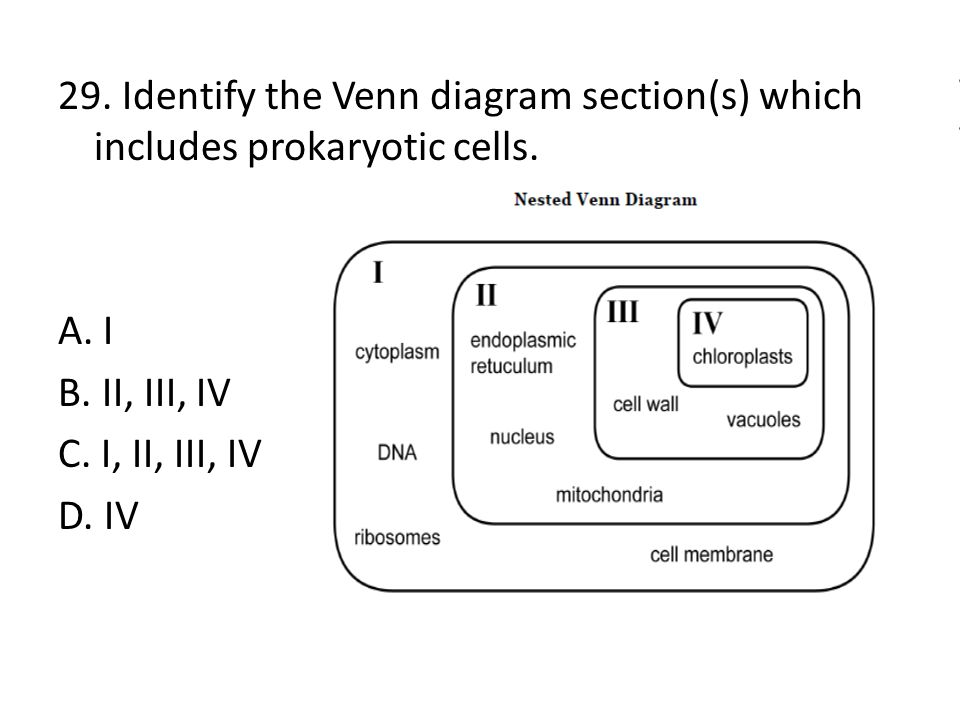 29. Identify the Venn diagram section(s) which includes prokaryotic cells.
