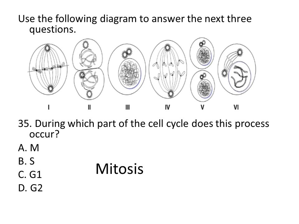 Mitosis Use the following diagram to answer the next three questions.