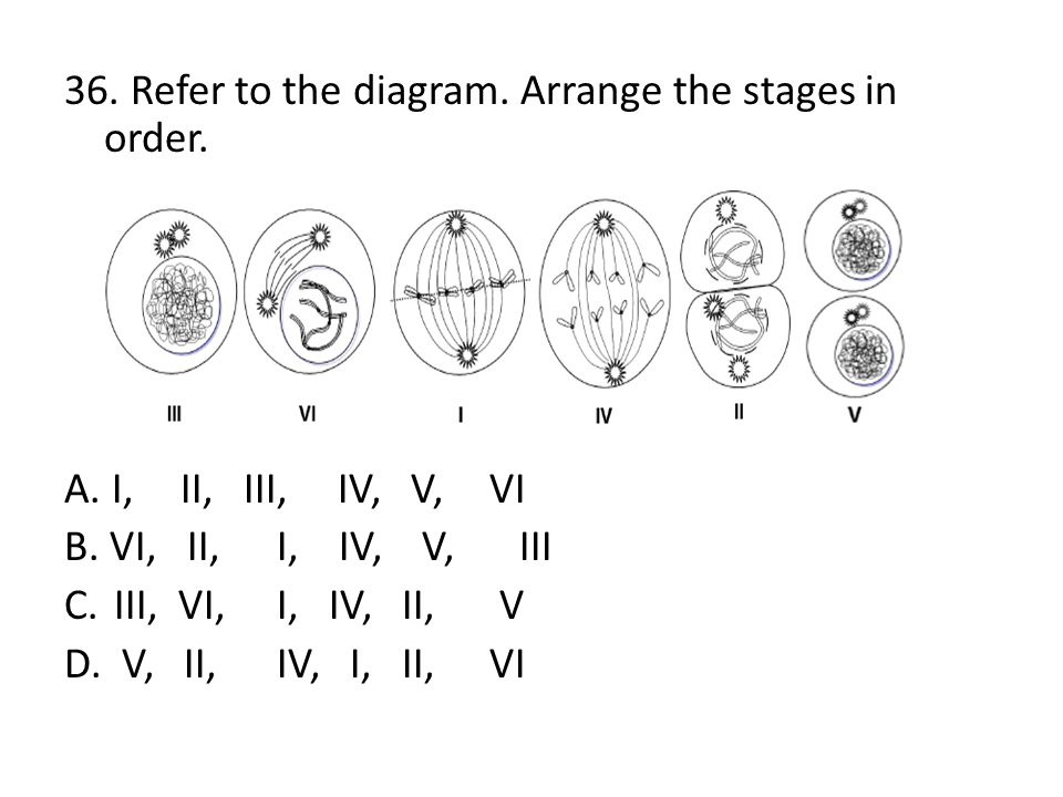 36. Refer to the diagram. Arrange the stages in order. A