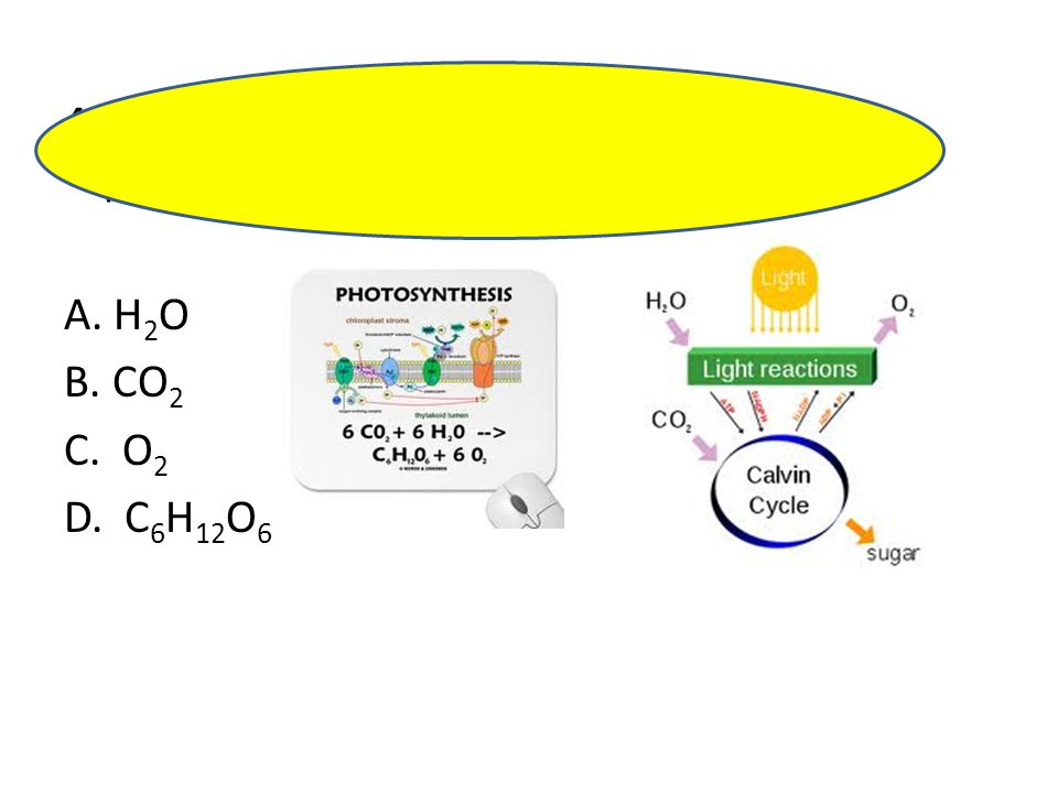 40. The compound synthesized during photosynthesis is_________________ .