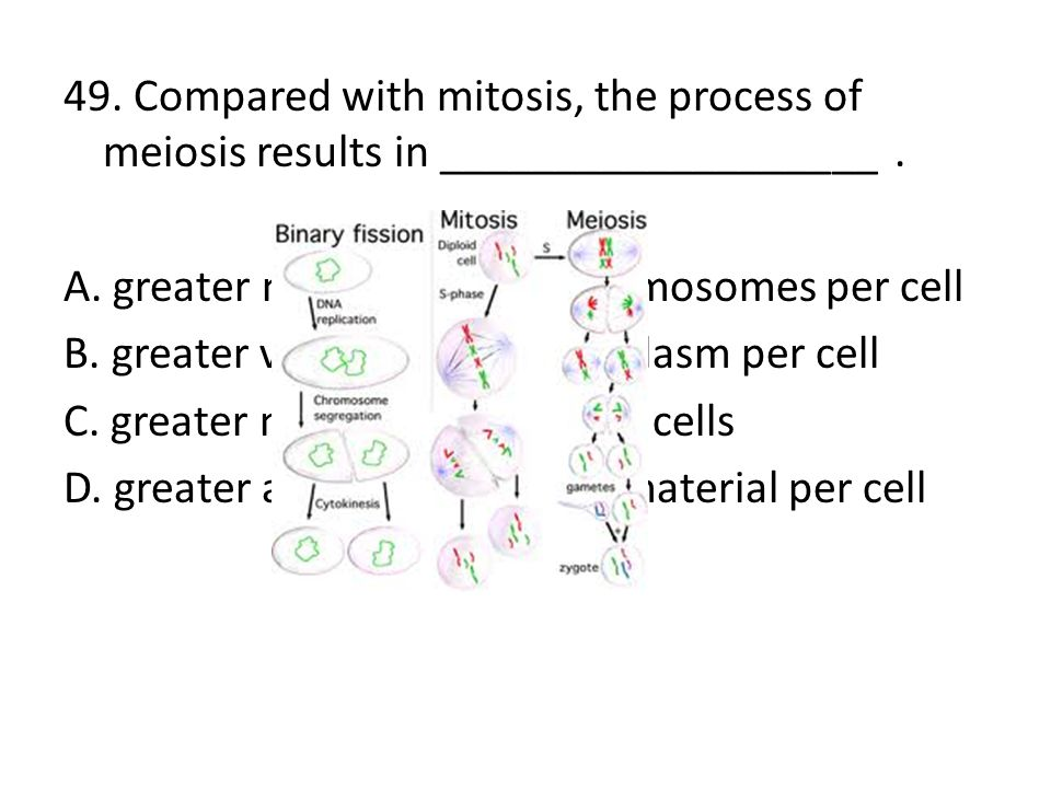 49. Compared with mitosis, the process of meiosis results in ___________________ .
