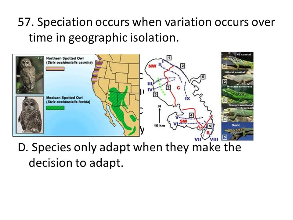 57. Speciation occurs when variation occurs over time in geographic isolation.