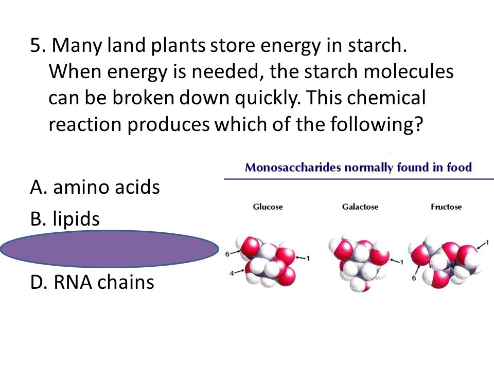 5. Many land plants store energy in starch