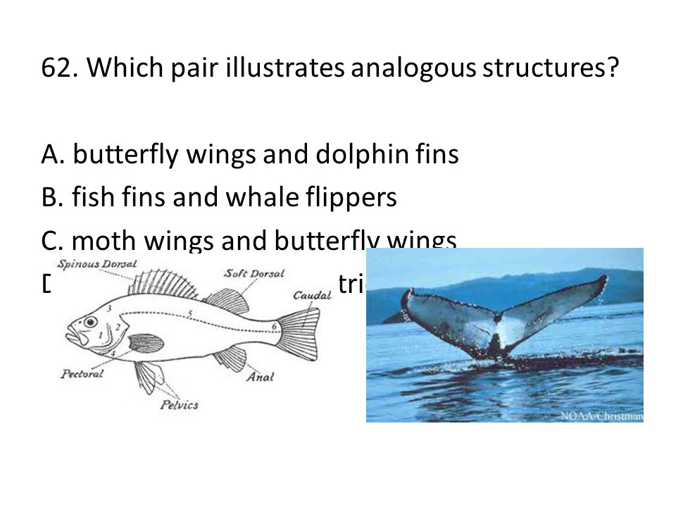 62. Which pair illustrates analogous structures