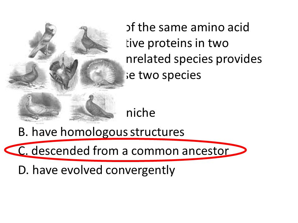 64. The occurrence of the same amino acid sequence in digestive proteins in two morphologically unrelated species provides evidence that these two species