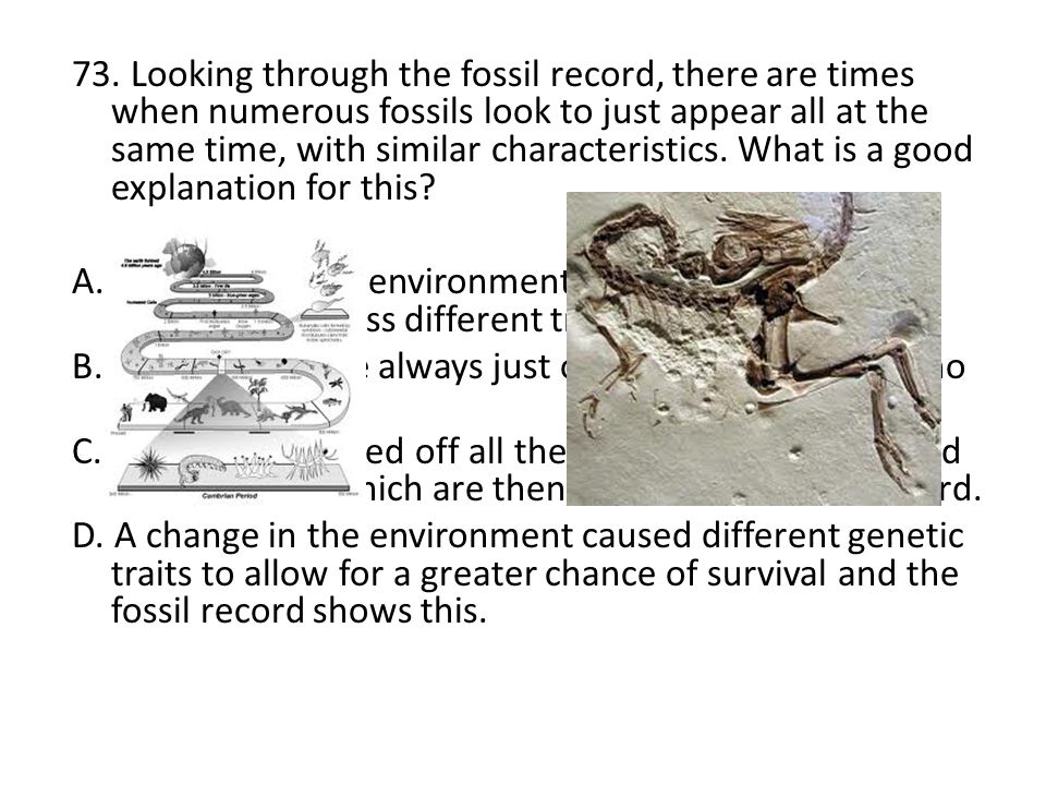 73. Looking through the fossil record, there are times when numerous fossils look to just appear all at the same time, with similar characteristics. What is a good explanation for this