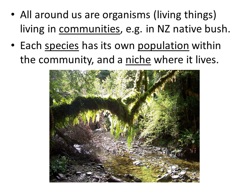 All around us are organisms (living things) living in communities, e.g. in NZ native bush.
