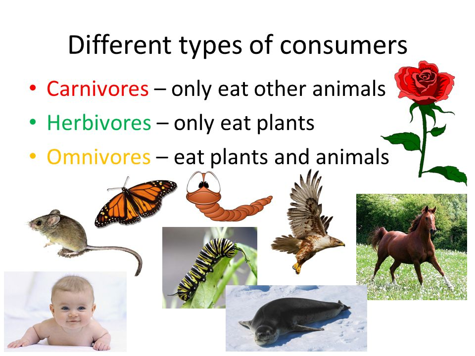 Different types of consumers