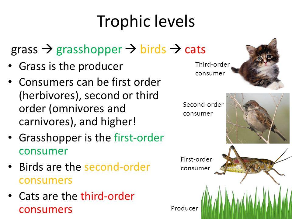 Trophic levels grass  grasshopper  birds  cats