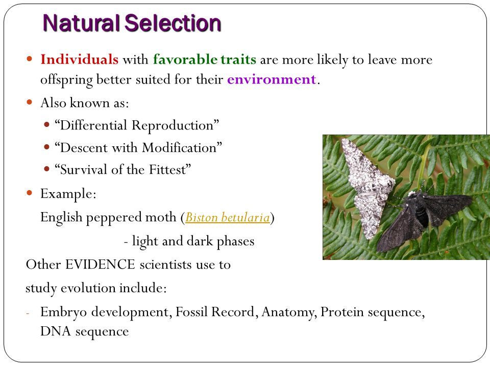 Natural Selection Individuals with favorable traits are more likely to leave more offspring better suited for their environment.