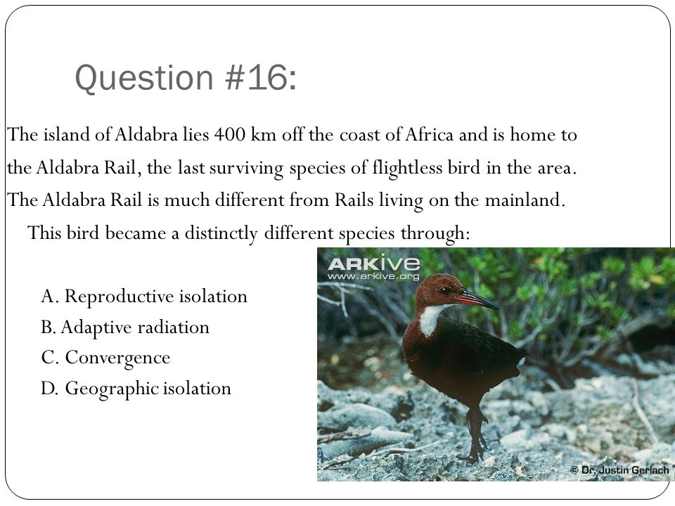Question #16: The island of Aldabra lies 400 km off the coast of Africa and is home to.