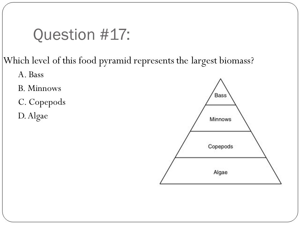 Question #17: Which level of this food pyramid represents the largest biomass A. Bass. B. Minnows.