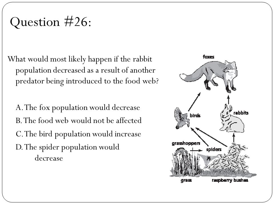 Question #26: What would most likely happen if the rabbit population decreased as a result of another predator being introduced to the food web