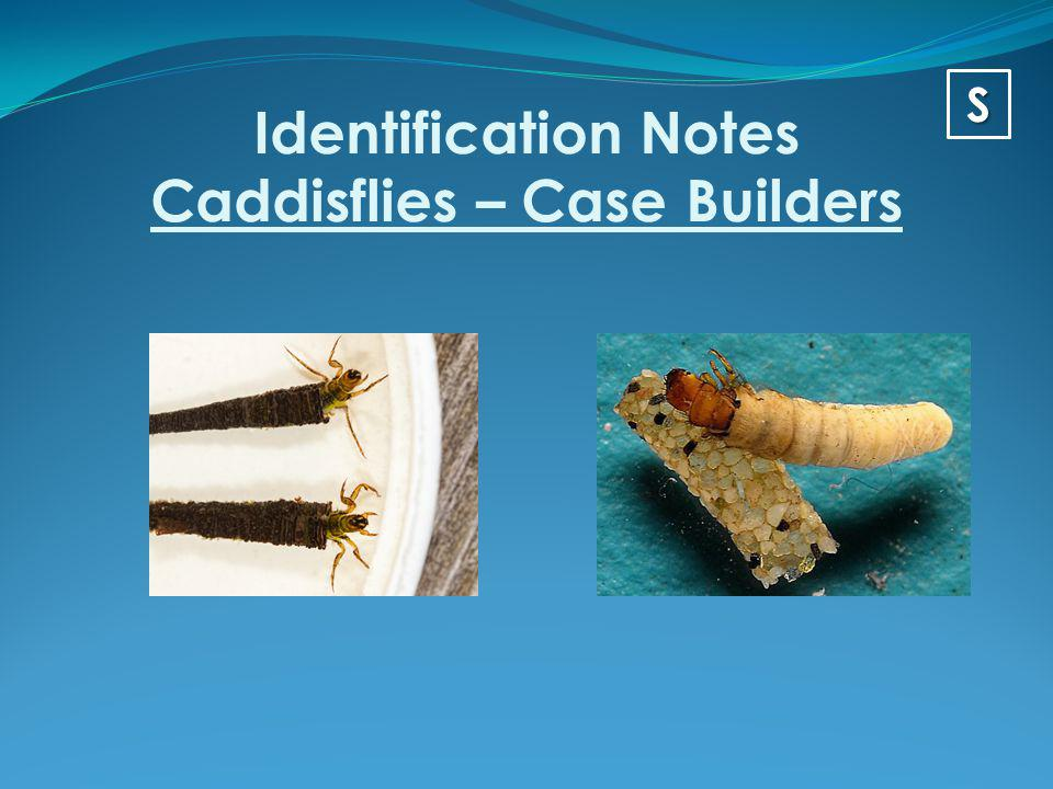 Identification Notes Caddisflies – Case Builders