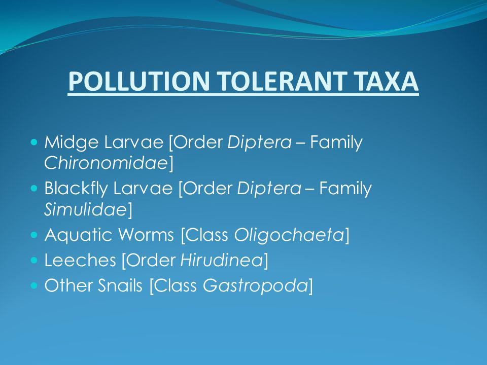 POLLUTION TOLERANT TAXA