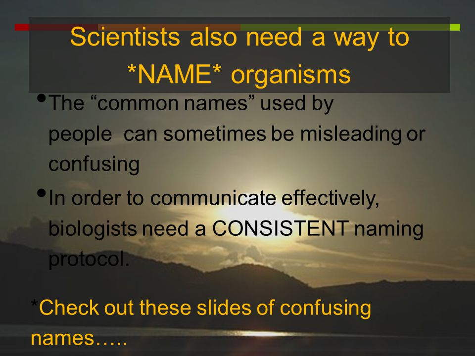 Scientists also need a way to *NAME* organisms