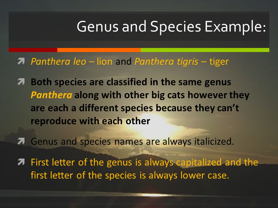 Genus and Species Example: