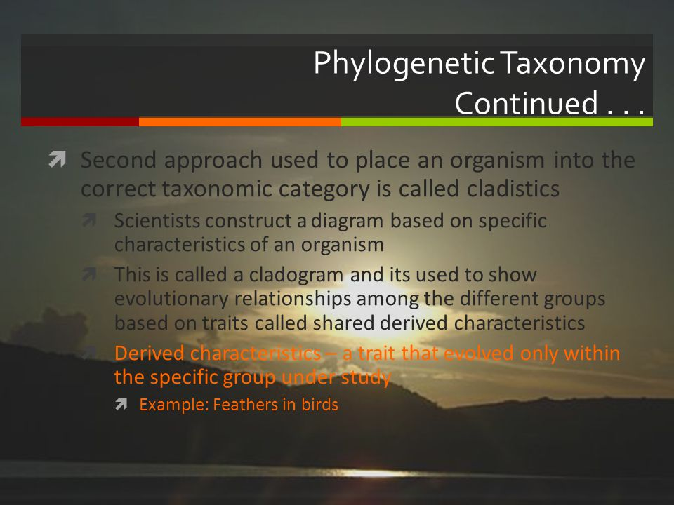 Phylogenetic Taxonomy Continued . . .