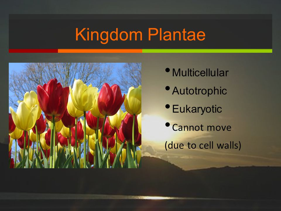 Kingdom Plantae Multicellular Autotrophic Eukaryotic Cannot move