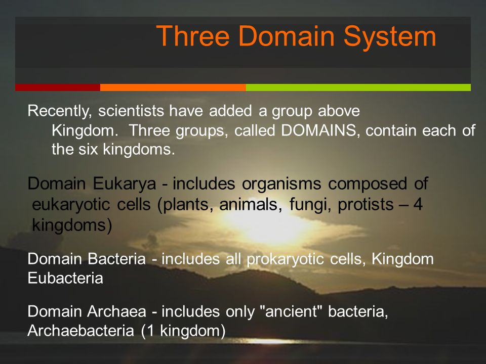 Three Domain System Recently, scientists have added a group above Kingdom. Three groups, called DOMAINS, contain each of the six kingdoms.