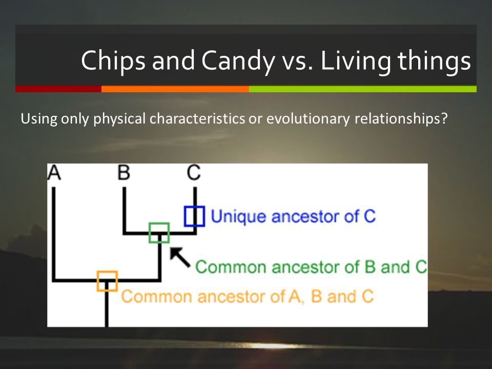 Chips and Candy vs. Living things