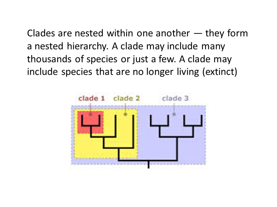 Clades are nested within one another — they form a nested hierarchy