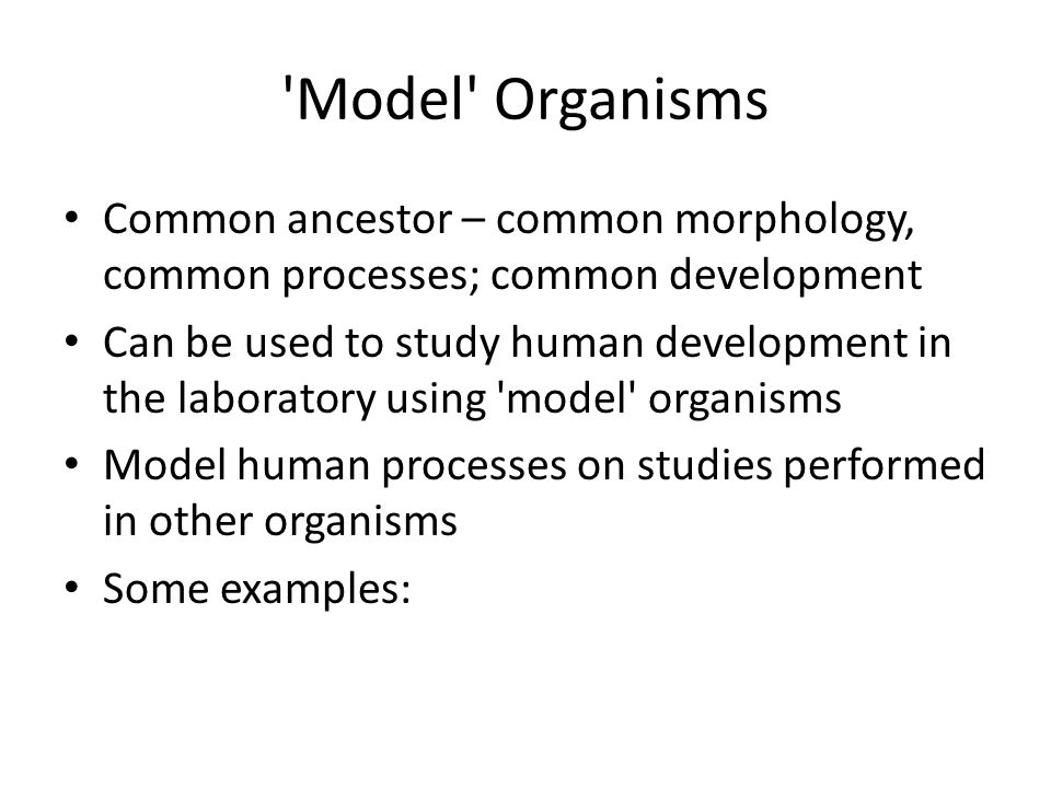 Model Organisms Common ancestor – common morphology, common processes; common development.