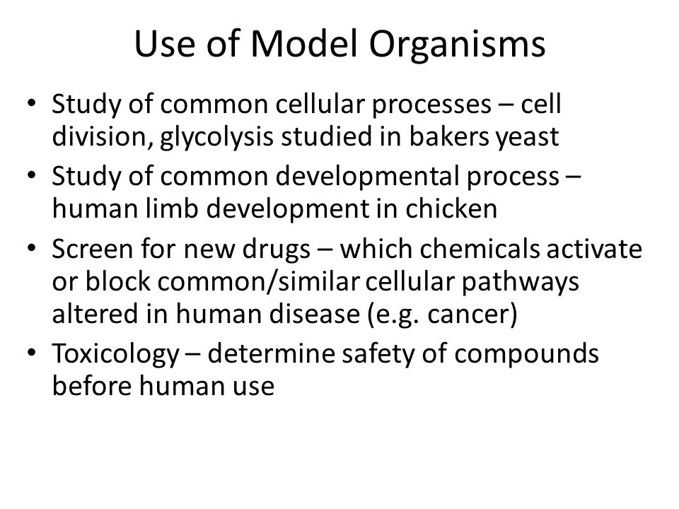 Use of Model Organisms Study of common cellular processes – cell division, glycolysis studied in bakers yeast.