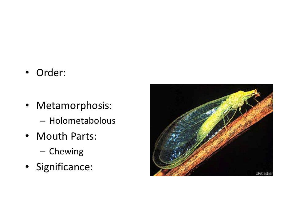 Order: Metamorphosis: Mouth Parts: Significance: Holometabolous