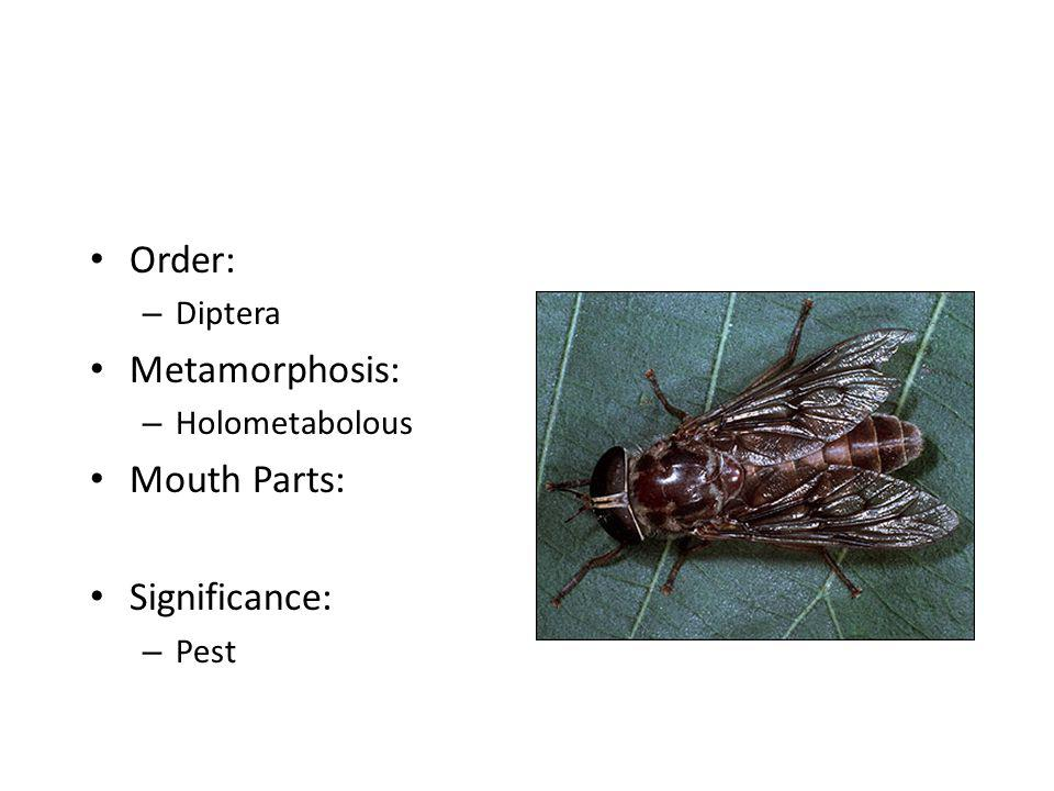 Order: Metamorphosis: Mouth Parts: Significance: Diptera