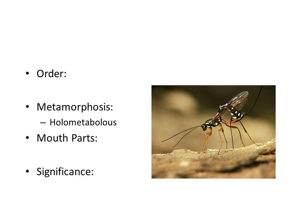 Order: Metamorphosis: Holometabolous Mouth Parts: Significance: