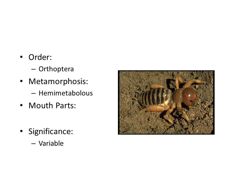 Order: Metamorphosis: Mouth Parts: Significance: Orthoptera