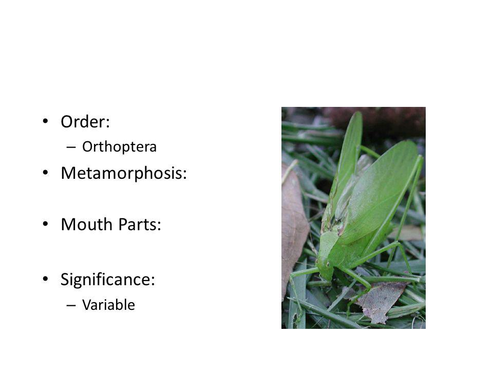 Order: Orthoptera Metamorphosis: Mouth Parts: Significance: Variable
