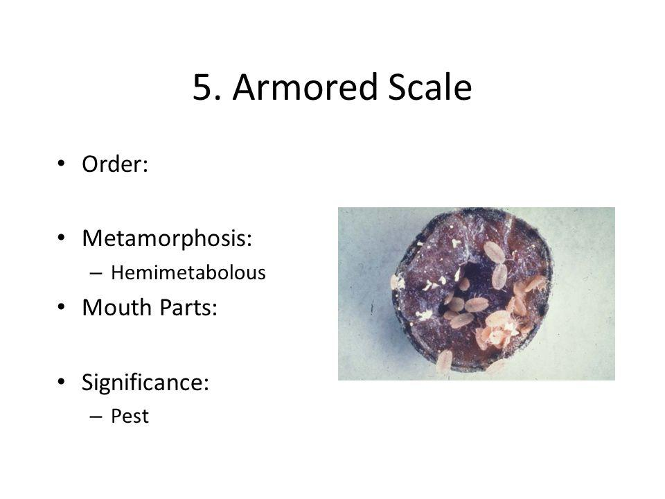 5. Armored Scale Order: Metamorphosis: Mouth Parts: Significance: