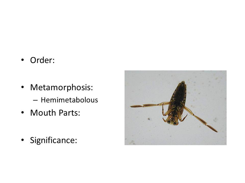 Order: Metamorphosis: Hemimetabolous Mouth Parts: Significance: