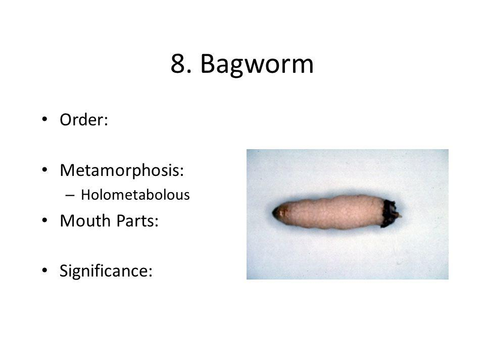 8. Bagworm Order: Metamorphosis: Mouth Parts: Significance: