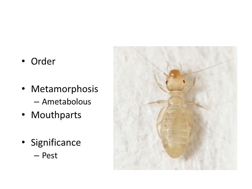 Order Metamorphosis Ametabolous Mouthparts Significance Pest