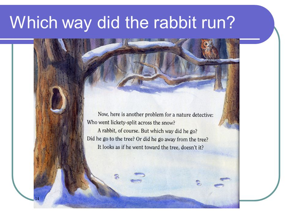 Which way did the rabbit run