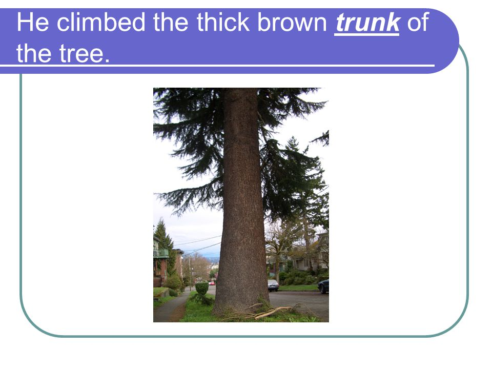 He climbed the thick brown trunk of the tree.
