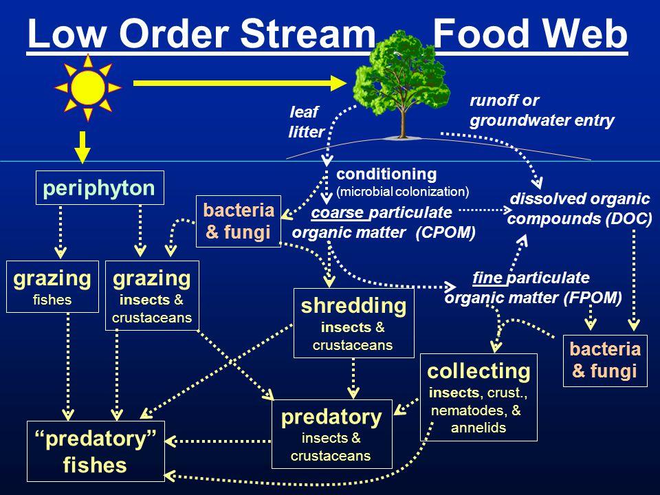 Low Order Stream Food Web