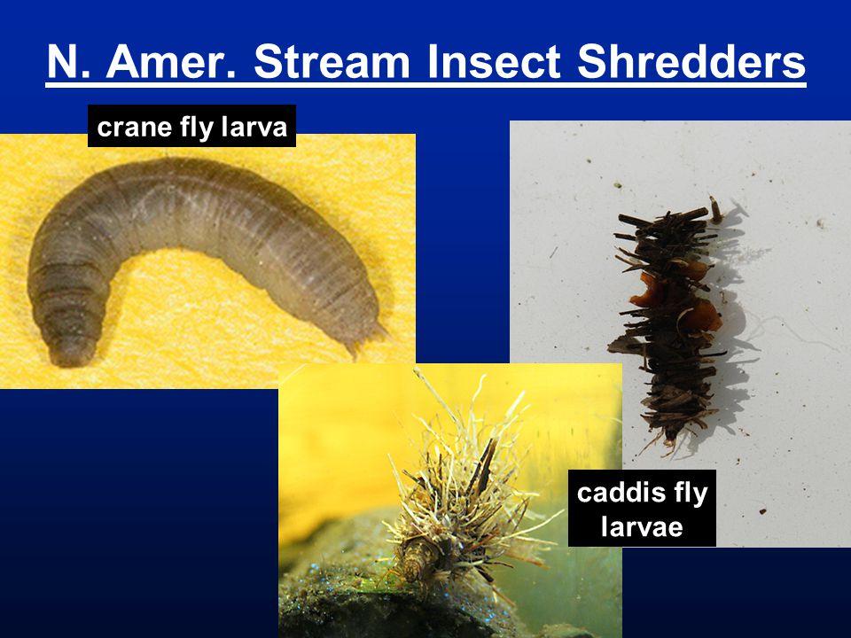 N. Amer. Stream Insect Shredders