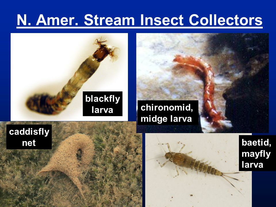 N. Amer. Stream Insect Collectors