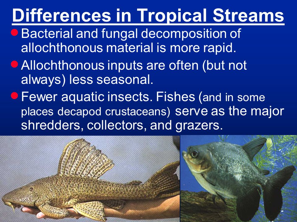 Differences in Tropical Streams
