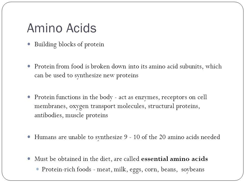 Amino Acids Building blocks of protein