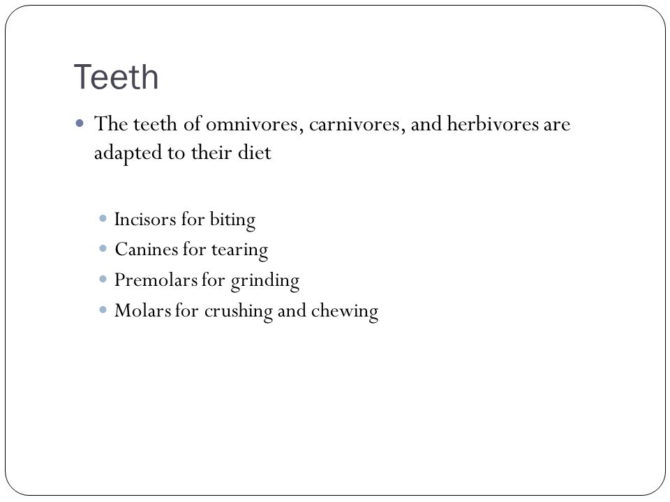 Teeth The teeth of omnivores, carnivores, and herbivores are adapted to their diet. Incisors for biting.