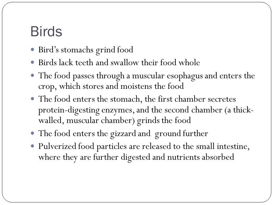 Birds Bird's stomachs grind food