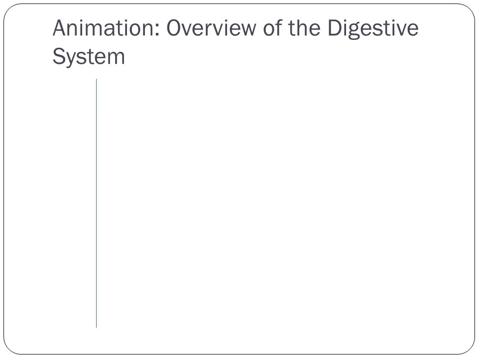 Animation: Overview of the Digestive System