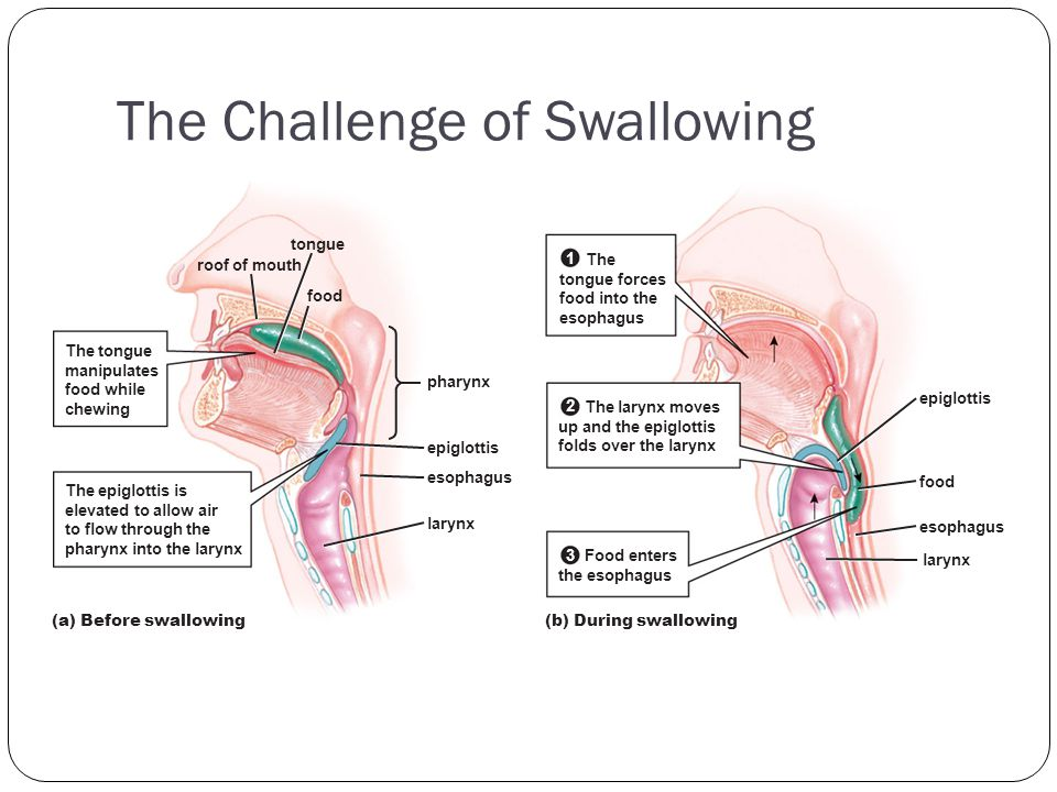 The Challenge of Swallowing